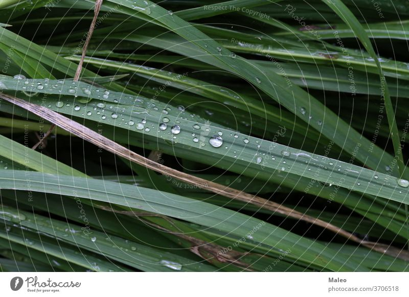 Green grass is covered with drops of morning dew green environment freshness nature spring bright garden growth closeup macro summer wet background season