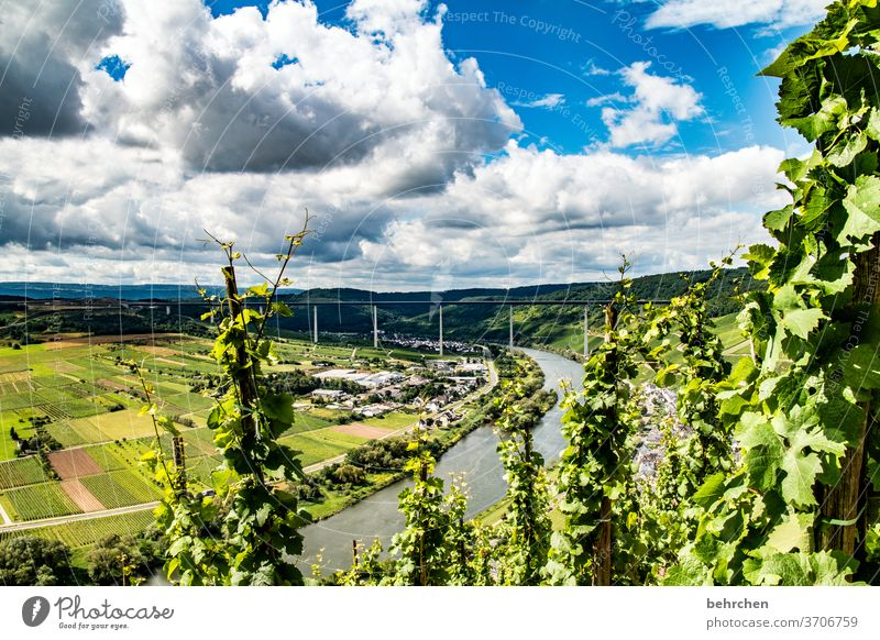 wine dream Hunsrück Moselle valley Sunlight Mosel (wine-growing area) River bank Lanes & trails Idyll tranquillity Wine growing Rhineland-Palatinate Adventure
