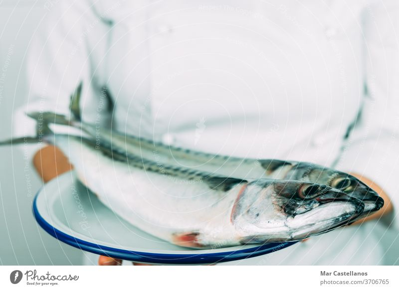 Woman in chef's clothes showing a dish with fresh fish. Kitchen concept. mackerel hand person professional kitchen natural wildlife seafood white jacket market