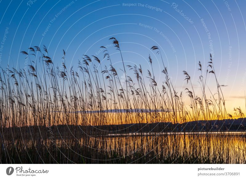 Evening atmosphere at the lake Sunset reed bank Lake Water Sky Colour reflection Horizon hillock Plant Reflection Exterior shot Landscape Calm Deserted Lakeside