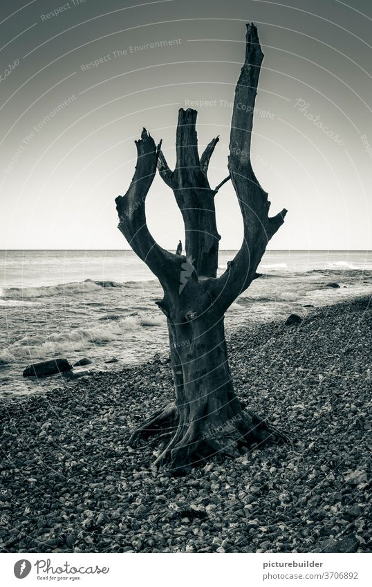 Tree trunk on the beach Beach Ocean tree branches standing upright Stand Waves Gravel dead Sky Horizon Coast Nature Deserted Water Exterior shot Landscape