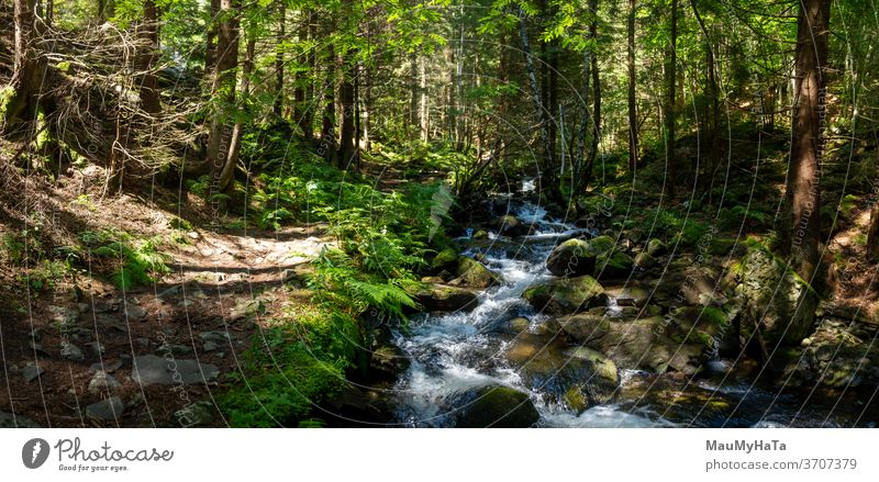 Mountain river next to a path in the forest mountain season summer trees vegetation panorama nature landscape beautiful outdoor green wood