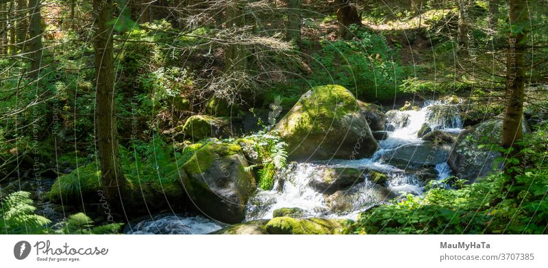 Mountain river next to a path in the forest nature Colour photo Landscape Tree water Exterior shot Day Green summer season Plant Shadow