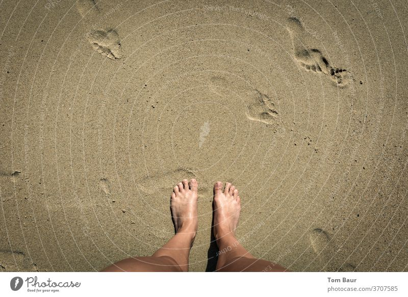 Feet in the sand Feet up foot Beach Sand footprint feet Footprints in the sand Summer Vacation & Travel Tracks Exterior shot Barefoot Coast Toes Sun Day