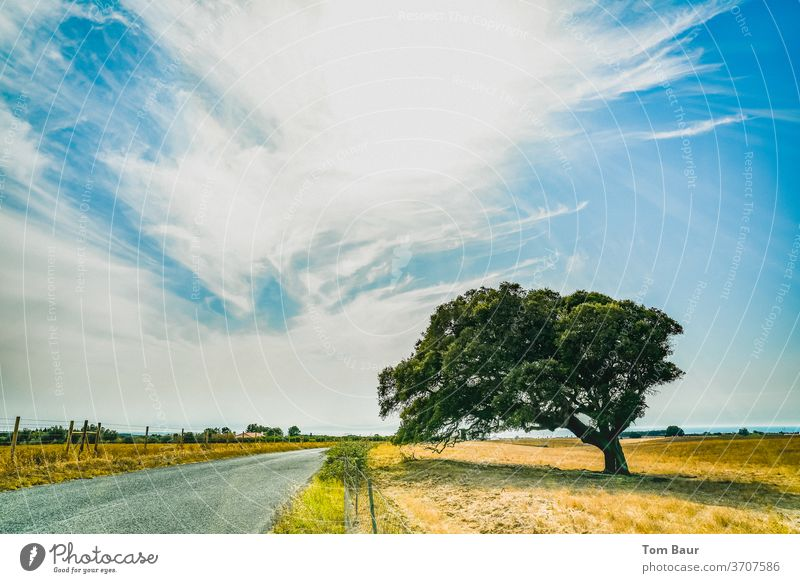 Tree in nowhere tree Sky Sun Street Meadow arid Drought Exterior shot Clouds Nature Field Light Blue green Sunlight Lanes & trails Environment Deserted