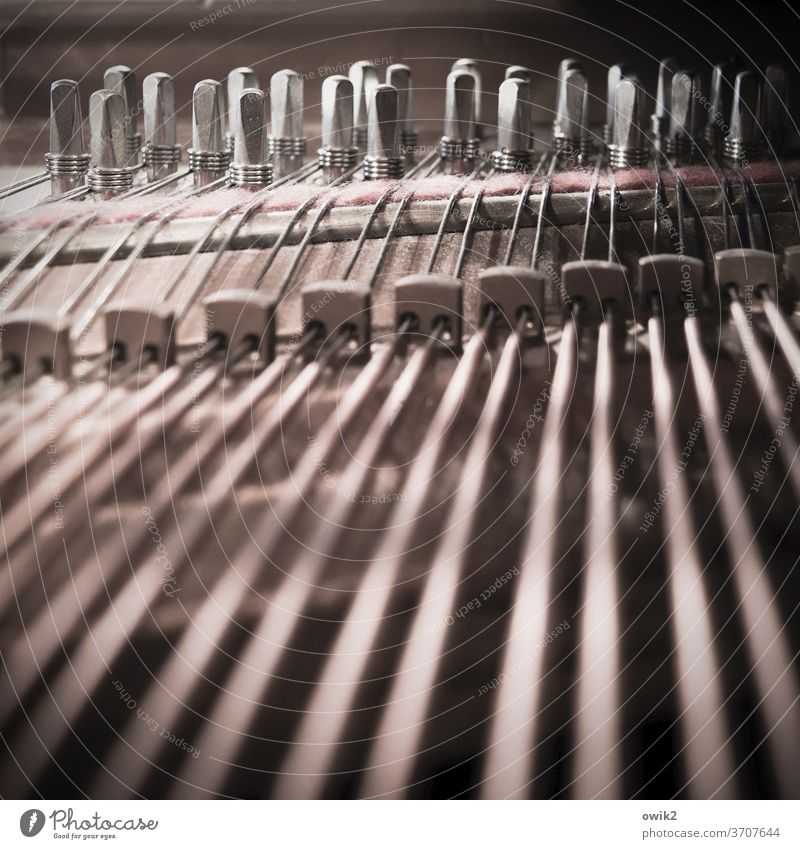parallel world Piano dusty Detail Interior shot Musical instrument Keyboard instrument Dusty Close-up Subdued colour interior view strings Tense Many Parallel