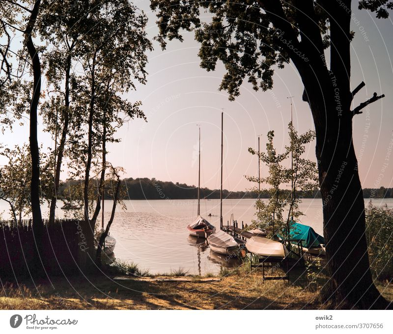 Private pleasure Panorama (View) Jetty Idyll Calm Footbridge Rowboat Island Lakeside Forest tree Beautiful weather Climate Autumn Horizon Cloudless sky Water