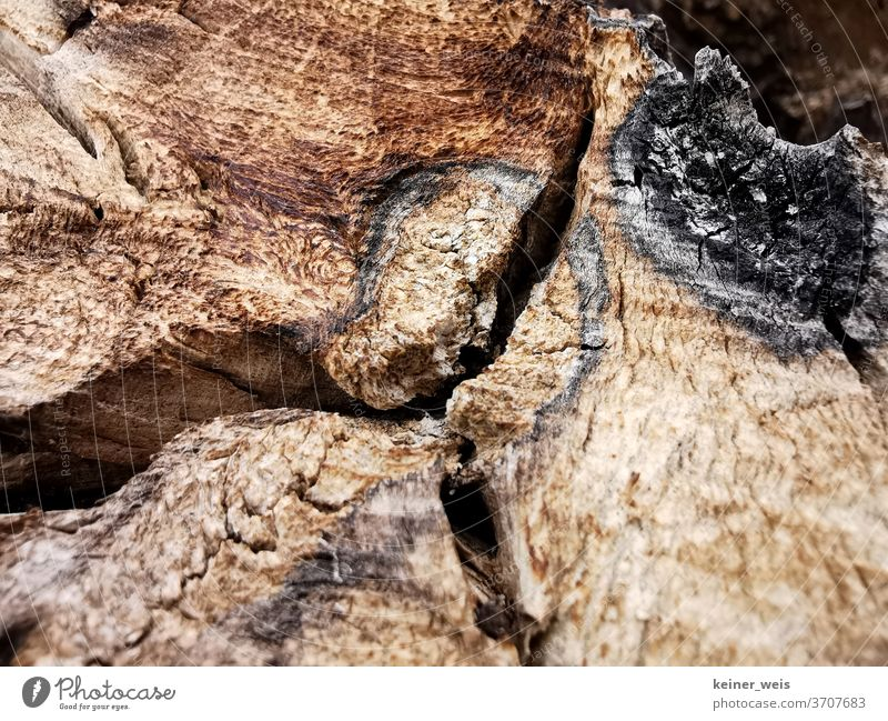 Close up of wood with saw marks and signs of lightning Wooden stake Wood grain fissure colors Brown Black Cut Tree trunk cleavage Colour photo Exterior shot