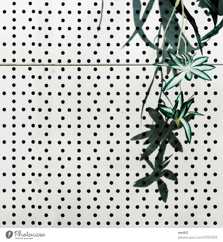 hanging gardens Plant leaves Sprelacard decoration Hideous holes Structures and shapes Shop window Deserted Detail Colour photo Pattern Abstract Exterior shot