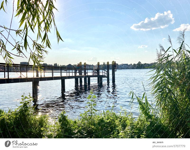 At the lake Lake bank Water Sky cloud Footbridge reed Potsdam Havel Deep Sea jetty Nature Landscape Exterior shot Colour photo Lakeside Deserted Calm Reflection