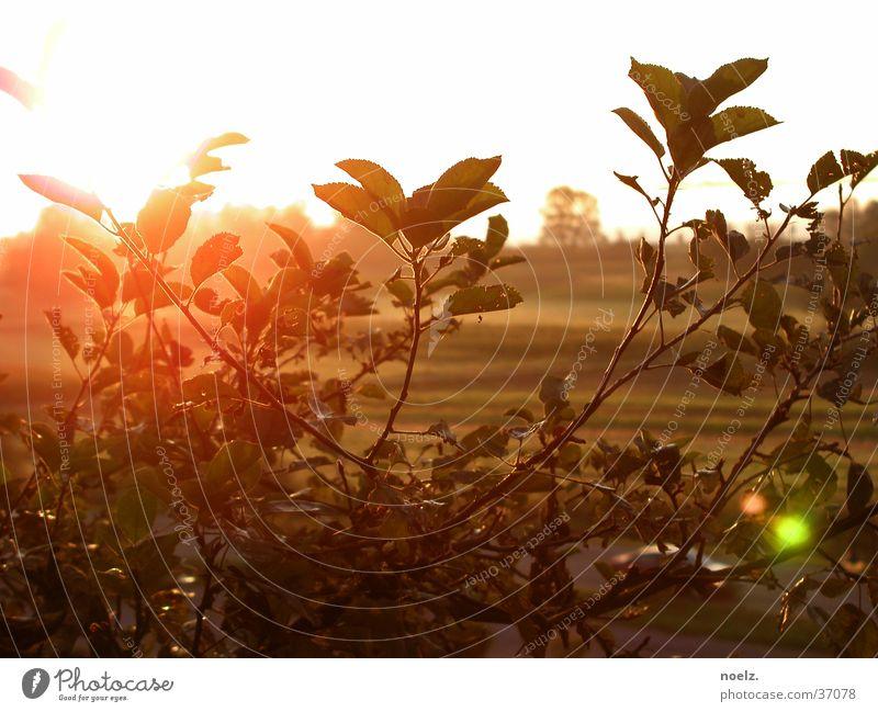 SONNE | BUSCH Aperture Bushes Back-light Foliage plant Leaf Sun Bright