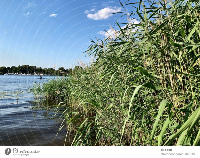 on the lakeshore Lake bank Water Sky cloud reed Potsdam Havel Deep Sea Nature Landscape Exterior shot Colour photo Lakeside Deserted Calm Reflection Idyll