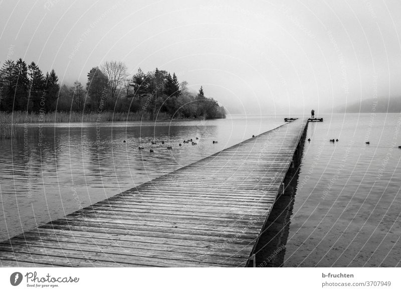 Wooden dock with lovers. Fog at the lake Lake wooden walkway Footbridge Nature Water Landscape Lakeside Calm Environment Surface of water Moody Idyll Morning