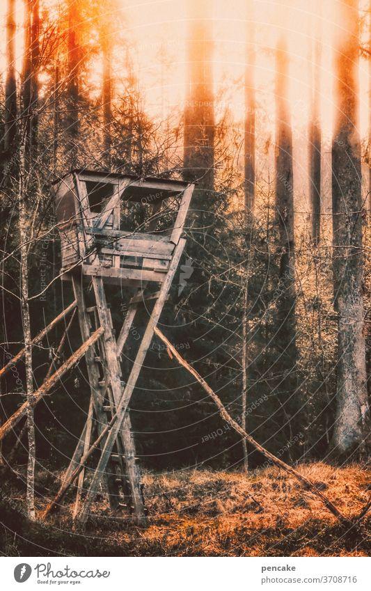 wenn der wald brennt Wald Feuer Hochsitz Brandgefahr Hitze Dürre Klimawandel Holz brennen
