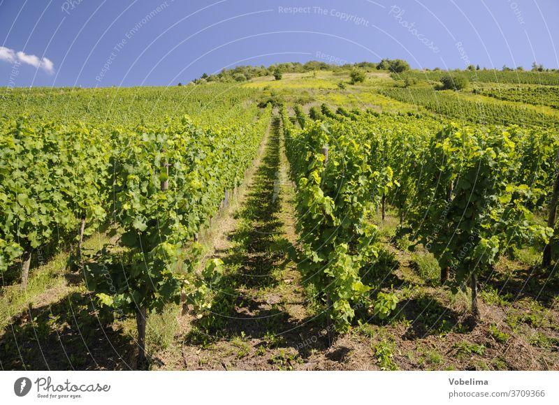 Weinberg weinberge rebe reben landwirtschaft himmel wolke sommer weinanbau weingebiet mosel rebberg wengert wingert weinbau