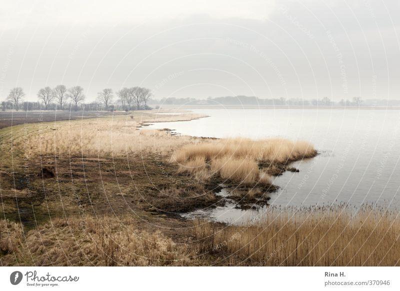 Sky Nature Landscape Calm Environment Grass Spring Coast Natural Horizon Fog Rügen Body of water Boddenlandscape NP