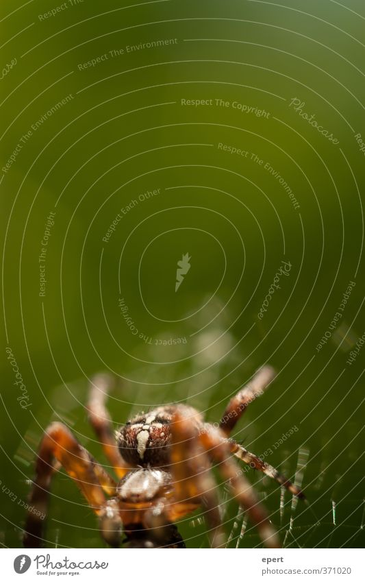 spider Animal Spider 1 Spider's web Cobwebby Crawl Esthetic Contentment Nature Colour photo Exterior shot Close-up Detail Deserted Copy Space top