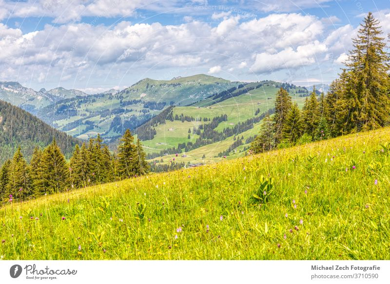 hiking near les mosses in the swiss alps grass alpine wilderness valley trekking tourism vaud water pic chaussy green nature outdoor hill travel panorama lake