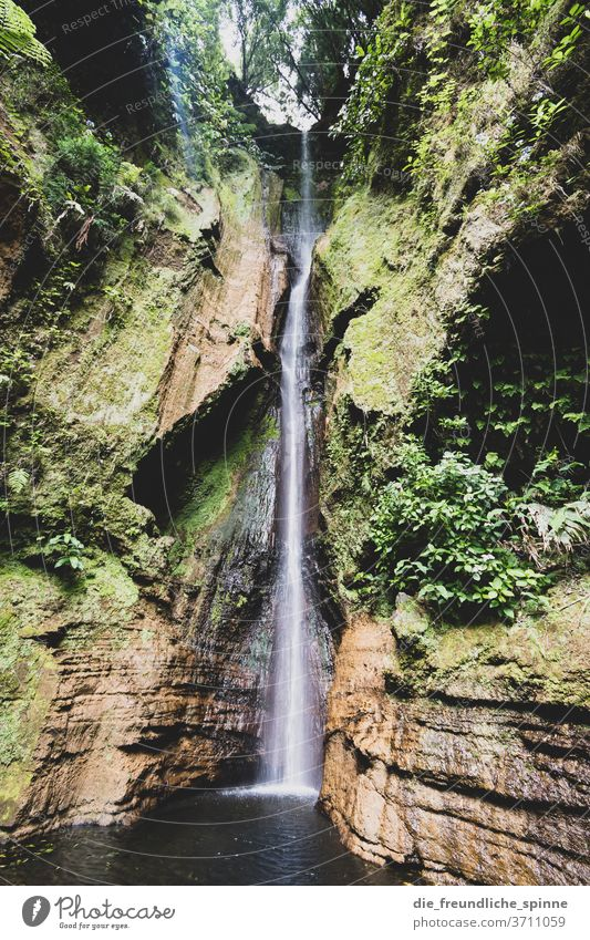 Waterfall in the Azores mountains Nature Drops of water Exterior shot Mountain Environment Rock Landscape Deserted Brook River green Day Canyon Stone Flow