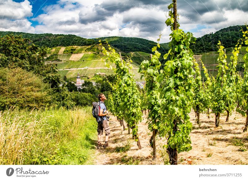 the scent of wine Architecture Town Forest Vacation & Travel Hiking Nature Exterior shot Environment Summer Landscape Colour photo Mountain Tourism Trip