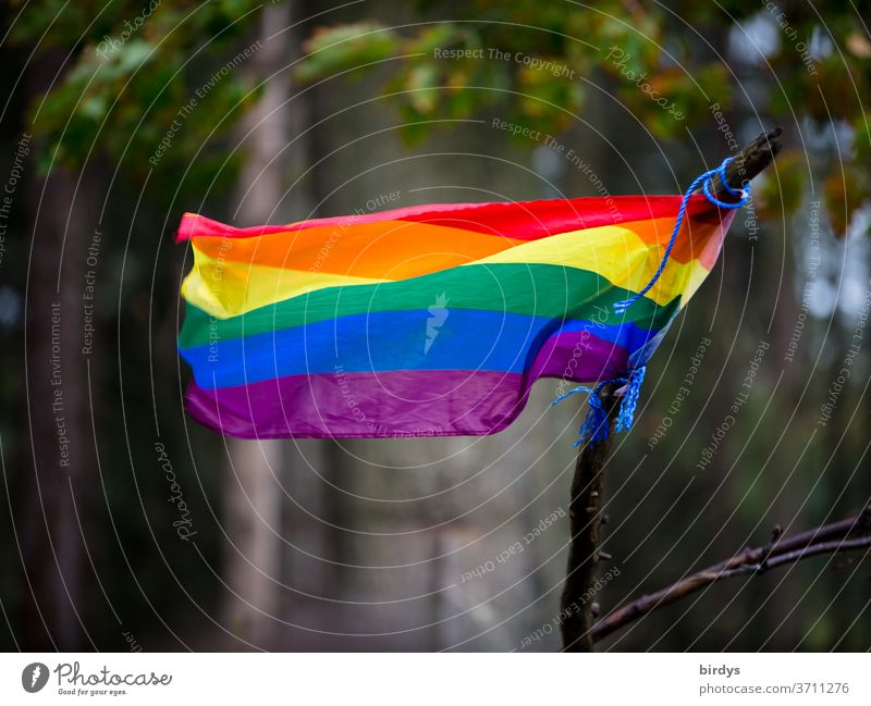 Rainbow flag waving in the wind. Central Perspective rainbow flag Prismatic colors Homosexual symbolism gay lesbians Transgender Freedom Symbols and metaphors