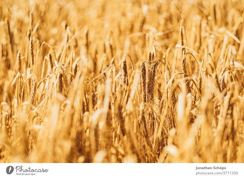 Grain field in summer Harvest Field gluten Agriculture Summer wide extension organic out Barley containing gluten Rye vegan vegetarian Wheat ecologic Cornfield