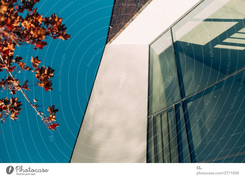 nature and architecture Architecture House (Residential Structure) architectural photography Window Sky Cloudless sky tree leaves Autumn Wall (building)