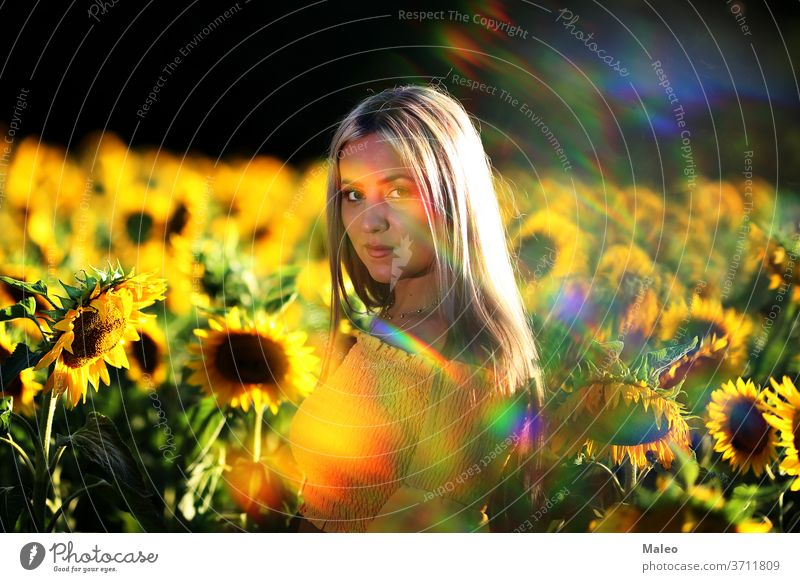 Portrait of a young girl in a sunflower field alone beautiful beauty blooming caucasian clean color country countryside cute dress free fresh fun green