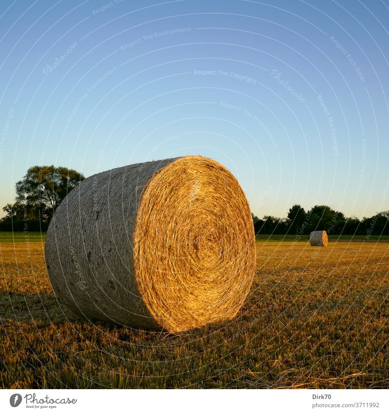 Autumnal: hay bales on the mowed meadow Hay Straw Hay bale Bale of straw Harvest mowing mares scythed Field Agriculture Sky Nature Landscape clear Cloudless sky