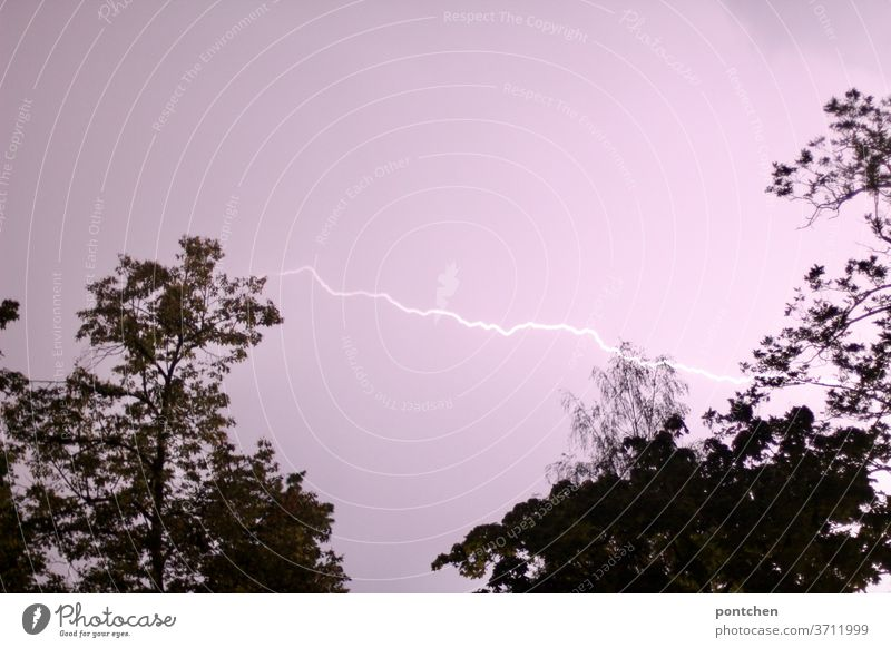 A lightning bolt in the pink sky between two trees. Thunderstorm, thunderstorm Thunder and lightning Electric charge Light arch Nature Natural phenomenon Cargo