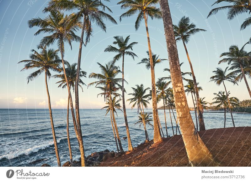 Coconut palm trees at sunset, summer vacation concept. coconut nature sea tropical beach holiday sky filtered effect landscape travel ocean coast blue green