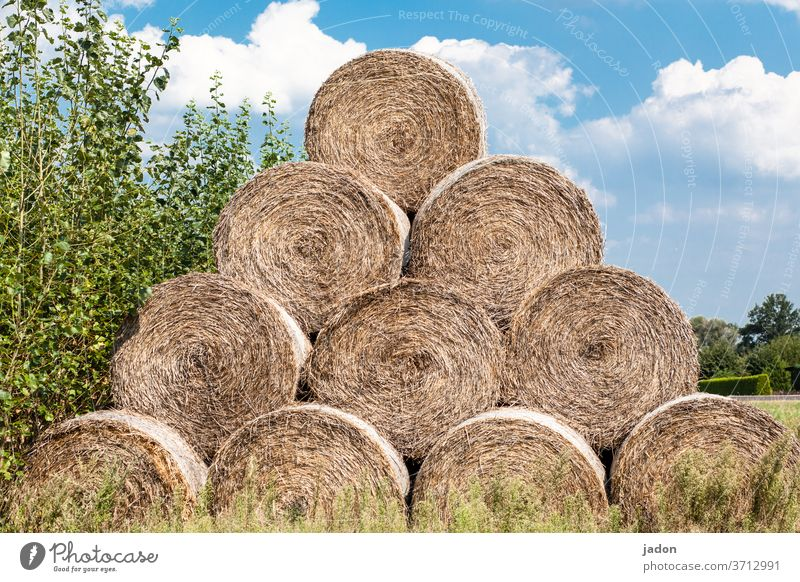 roll picture. all 10! Coil Hay Grass Nature Exterior shot Colour photo Meadow Field Landscape Agriculture Deserted Harvest Feed rural Straw bale Stack