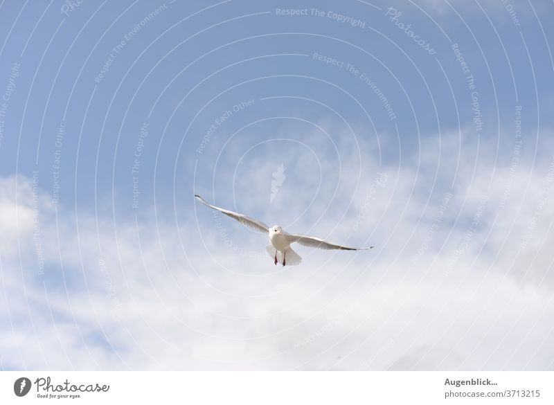 a flying gull Seagull Sky Flying Blue Ocean Freedom Grand piano Beach Water White Feather Coast Vacation & Travel Baltic Sea