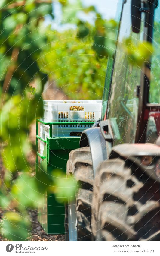 Tractor on farm in summer tractor garden grape vineyard season harvest parked green transport agriculture shabby rural nature sunny daytime plant growth vehicle