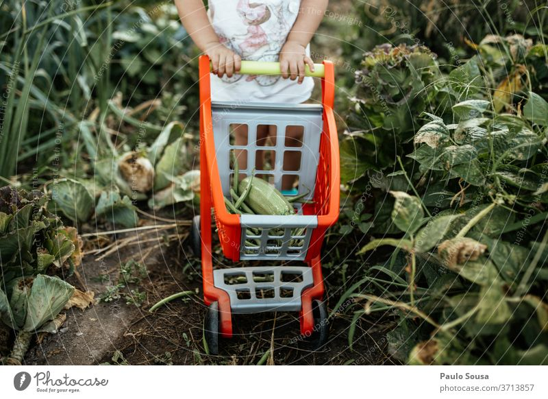 Child with cart picking vegetables from garden childhood Organic produce Organic farming Vegetarian diet Vegetable veggie Fresh freshness Healthy Food Nutrition