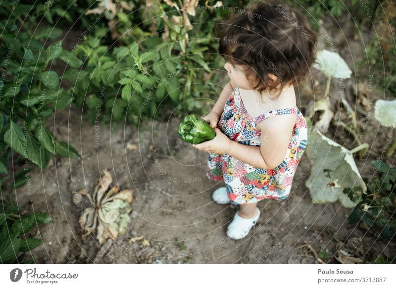 Child holding green pepper childhood Vegetable veggie vegetables Pepper Green Organic produce healthy Colour photo food Food Nutrition Fresh Close-up Delicious