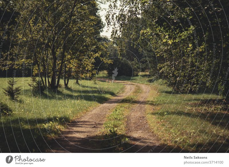 lonely winding country road with trees both sides in sunny morning forest nature path autumn landscape green park grass spring woods rural foliage lane outdoors