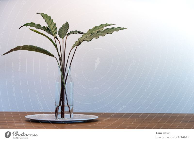Green leaves in vase on wooden table - Calathea crocata Foliage plant Table Vase Part of the plant Table decoration Oak tree Still Life Style Ambient Lifestyle