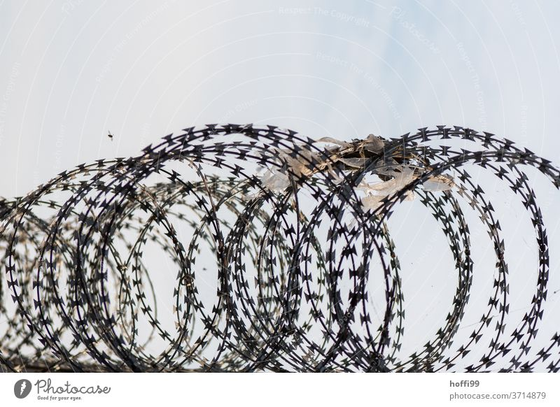 Barbed wire on wall with past foil tests and bee in approach Barbed wire fence NATO wire plastic foil Bee War Crisis Threat Dangerous Wire fence Border