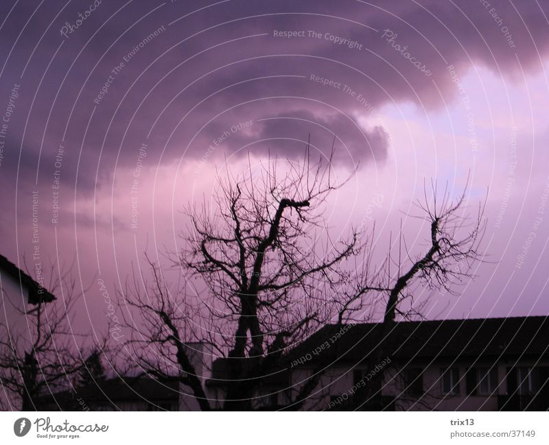 violet sky Roof Tree Black Violet White Clouds Bad weather Sunset Branch Sky Weather Pink