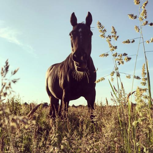 Just a horse. Horse Willow tree Grass blade of grass Summer Evening Nature Animal Lonely To feed Exterior shot Meadow Landscape Sky Deserted Environment