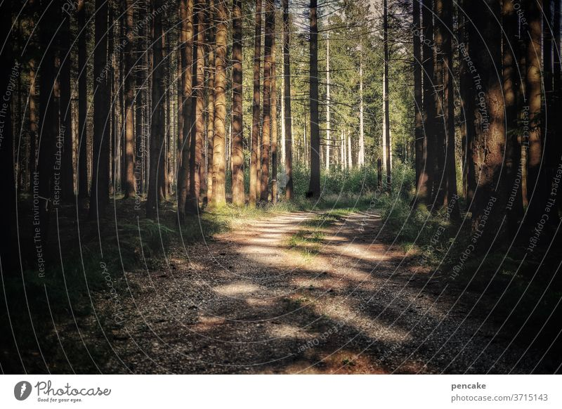 local recreation Forest path Sunlight Shadow Relaxation at home vacation Hiking evening mood Sunset huts To go for a walk Environment Deserted Lanes & trails