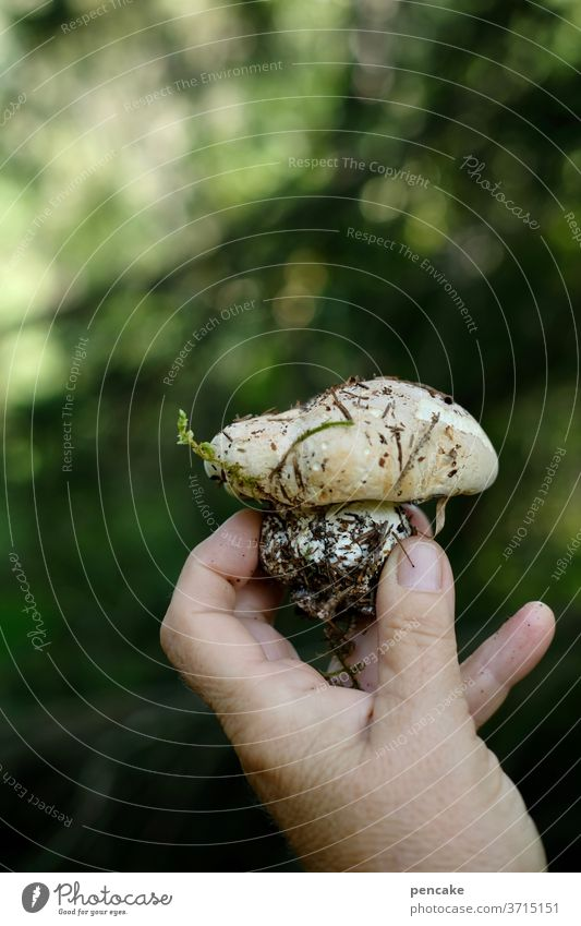 little wood gnome Mushroom Forest by hand stop Indicate Earth Close-up present frowzy Gnome