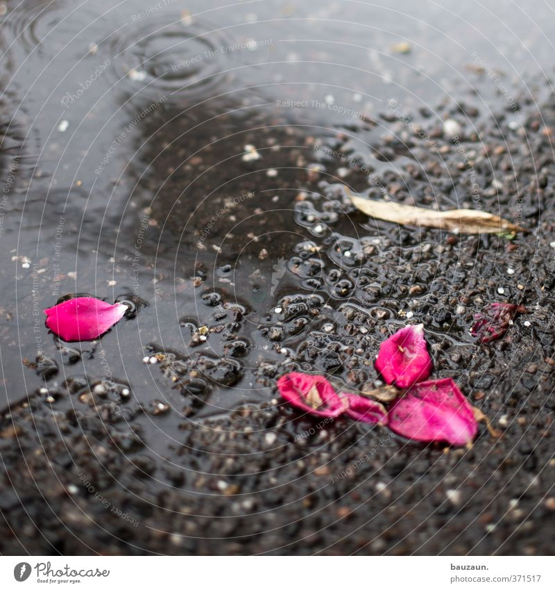 Nature Environment Street Life Lanes & trails Gray Blossom Garden Lie Pink Park Rain Earth Climate Transience Blossoming