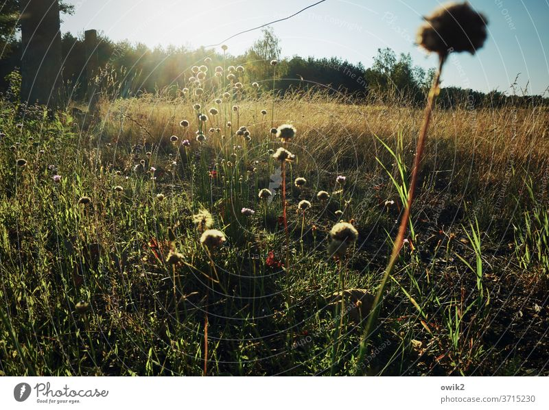 edge of the field Meadow Deserted Plant Colour photo Day Summer Exterior shot Nature Environment natural Shallow depth of field Beautiful weather Sunlight
