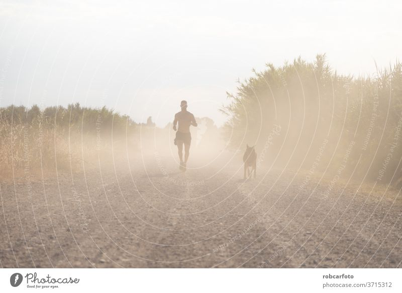 man training with his dog people grass male sky pet happy fun sunset outdoor nature meadow men summer animal silhouette dusk friendship sport healthy workout