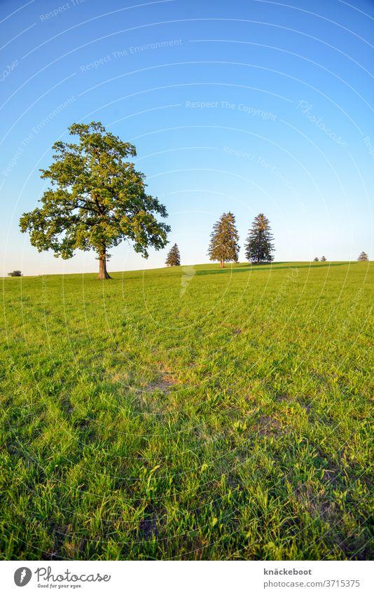 Trees on field in Allgäu allgau Mountain Meadow green tree Clouds Bavaria Colour photo Exterior shot Sky Hiking Summer Wide angle