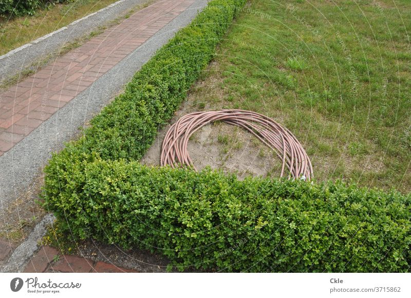 Tube in hedgerow landscape with sidewalks Garden hose Park hedges green Walkways Garden paths Hose Cast Gardening Colour photo Plant Water hose tiles Drought
