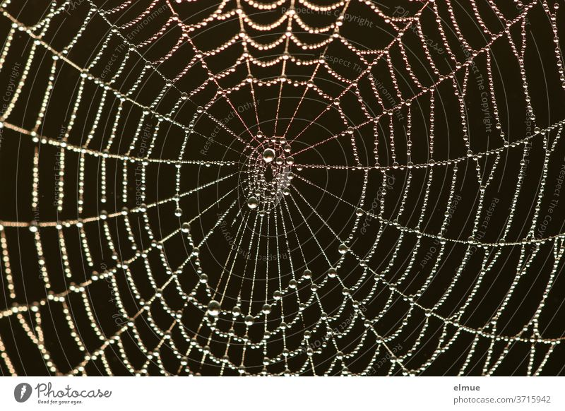 a classic in black - pearls of pure water got caught in the spider's web in the early morning Spider's web Network Pearl Drops of water Water Contrast threads