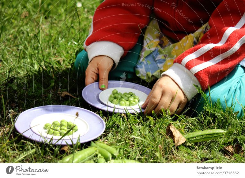 Children's hands holding plates with green fresh peas Peas bean counters Pea pods children's hands Healthy Eating Vegan diet Food photograph Vegetable